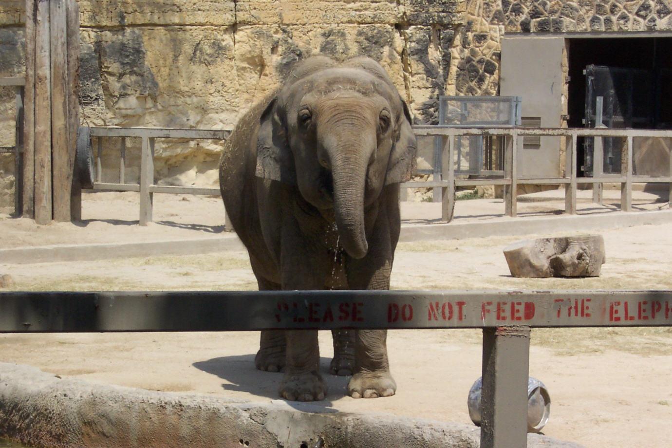 Lagniappe San Antonio Zoo Photographs