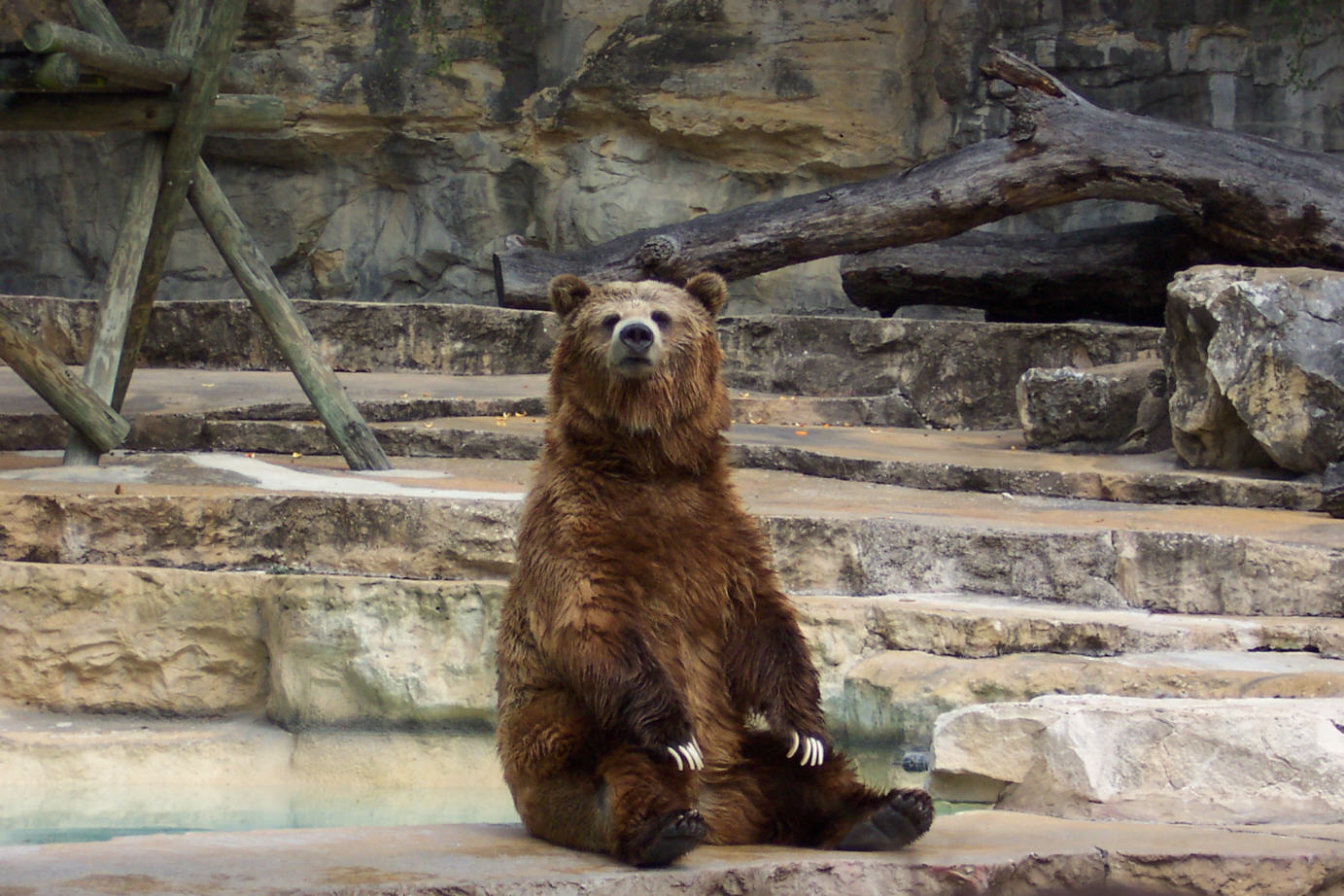 Mojo Fun NEW for 2014: SUN BEAR 1_Grizzly_Bear_02
