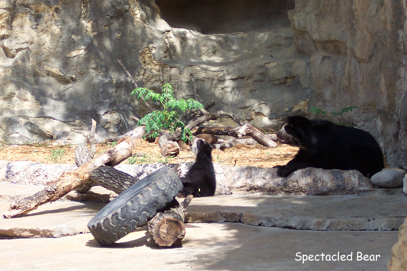 Jaguar San Antonio >> Lagniappe - San Antonio Zoo Photographs