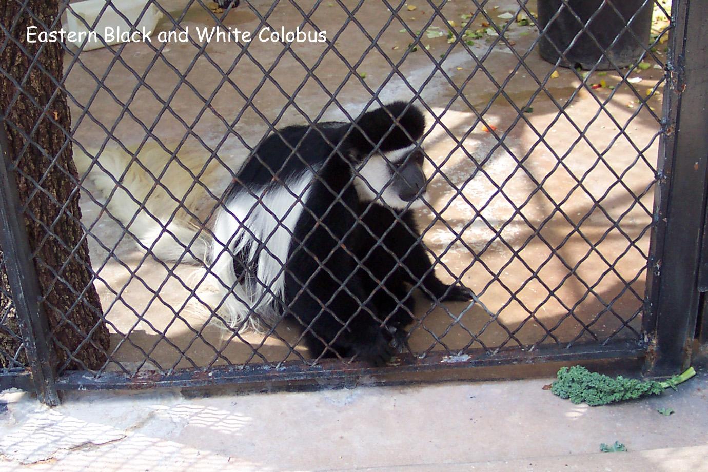 Lagniappe - San Antonio Zoo Photographs
