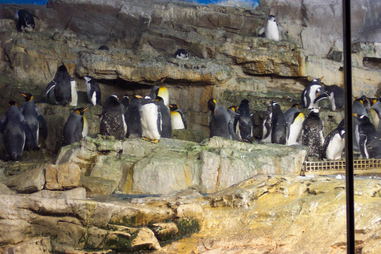 5_seaworld_penguins_02.jpg