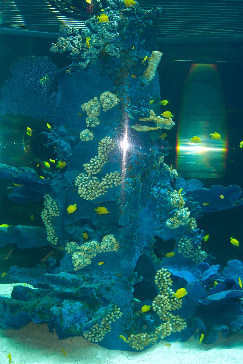 9_seaworld_coralreef_01