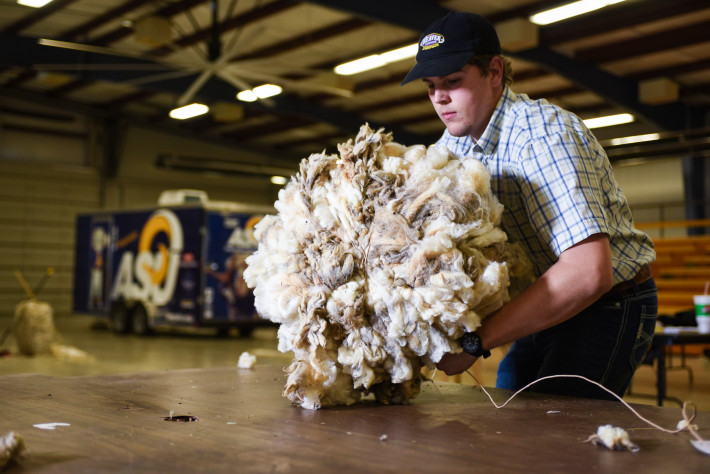 ASU student working with freshly sheared wool