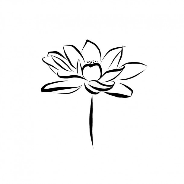 Lotus Drawing by Dr. Laurence Musgrove