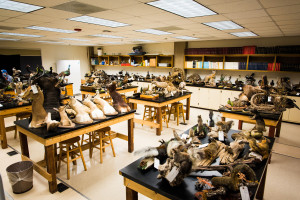 Photo of 150-plus new specimens for ASU Natural History Collections