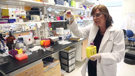Dr. Angela Belcher in her lab at MIT