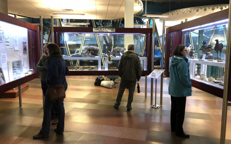 Visitors enjoy the Angelo State Natural History Collections exhibit at the Stephens Central Library.