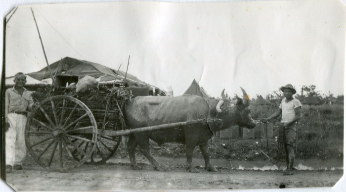 Ox drawn wagon, Luzon, Philippines