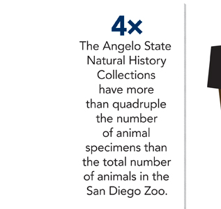 4×: The Angelo State Natural History Collections have more than quadruple the number of animal specimens than the total number of animals in the San Diego Zoo.